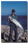 rock-mackerel-steep-point-sa-818-copy