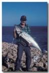 rock-mackerel-steep-point-sa-818-copy