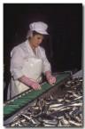 sardines-ko-371-copy