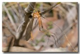scorpion-fly-wollongong-llg-300-web-copy