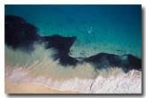 shark-feeding-frenzy-cb-340-copy