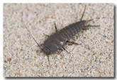 silverfish-port-smith-llh-985-web-copy