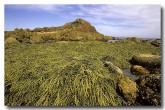 south-coast-mimosa-rocks-np-xn-299