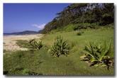 south-coast-murramarang-np-pebbly-beach-am-164