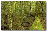 south-coast-murramarang-np-rainforest-xn-203