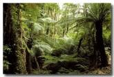 south-coast-nadgee-wilderness-ac-023