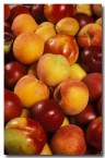 stone-fruit-dw-575-copy