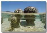 stromatolites-he-384-copy