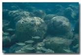 stromatolites-kk-794-copy