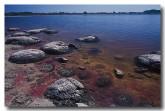 stromatolites-lake-thetis-fx-504-copy