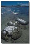 stromatolites-lake-thetis-ll-881-copy