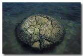 stromatolites-lake-thetis-zz-752-copy