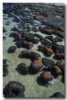 stromatolites-rr-820-copy