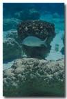 stromatolites-rr-836-copy