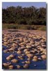 stromatolites-yalgorup-bu-587-copy