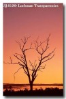 sunset-sj-812-copy