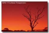 sunset-sj-815-copy