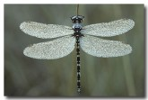 synthemis-sp-possibly-em-162