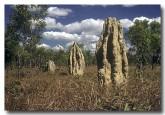 termite-mound-hg-307-copy