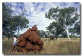 termite-mound-ll-288-copy