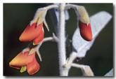 thinicola-incana-ap-081-web-copy