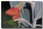 thinicola-incana-ap-085-web-copy