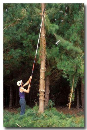 (AE-922) Pine plantation – timber harvesting