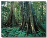 tropical-rainforest-queensland-rw-164-copy