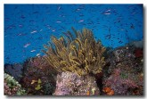 tropical-underwater-cm-250-copy