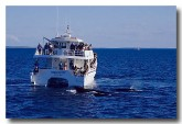 whale-watching-in-qld-hk-502-copy