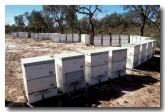 beehives-xe-095-copy