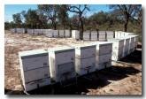 beehives-xe-095-copy