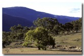 capital-country-namadgi-np-ao-033
