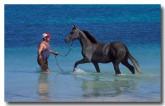 horses-dt-006-copy