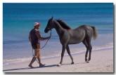 horses-dt-007-copy