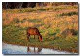 horses-sa-678-copy