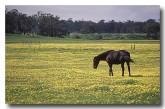 horses-sa-679-copy