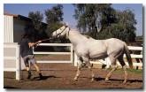 horses-se-950-copy