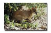 Agile Wallaby XP-691 © Jiri Lochman LT