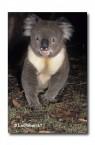 Koala RW-490 ©Jiri Lochman LT