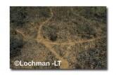 Leporillus conditor-Greater Stick-nest Rat  ZMY-606 ©Jiri Lochman- Lochman LT