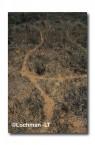 Leporillus conditor-Greater Stick-nest Rat  ZMY-611 ©Jiri Lochman- Lochman LT