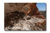 Lesser Stick-nest Rat ACD-942 © Marie Lochman LT
