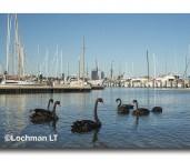 RPYC-Matilda Bay LLM-451 ©Jiri Lochman- Lochman LT