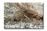 Short-beaked Echidna LLN-286 ©Jiri Lochman- Lochman LT.