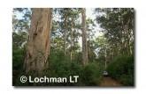 Warren NP AGY-577 ©Marie Lochman- Lochman LT