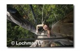 Warren NP - Bicentennial Tree LCY-223 ©Jiri Lochman- Lochman LT