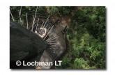 Warren NP - Bicentennial Tree LCY-233 ©Jiri Lochman- Lochman LT