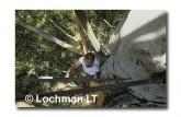 Warren NP - Bicentennial Tree ZAY-874 ©Jiri Lochman- Lochman LT