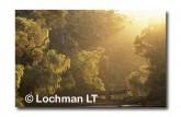 Warren NP PPY-307 ©Jiri Lochman- Lochman LT